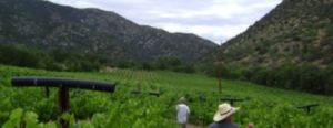 Arizona's 1st 90-Point Wines Grown on So AZ Vineyard
