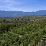 vineyard generic