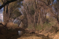 Project Aims to Detain Rainwater to San Pedro River Aquifers