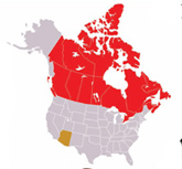Internationally Owned CRE in Maricopa is 90% Canadian-Owned