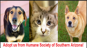 Marana and HSSA Negotiate Animal Sheltering Services