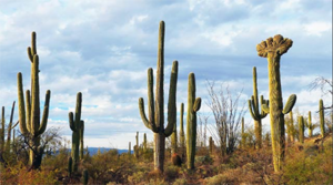 Saguaro National Park East Adds 44 Acres to Preserve