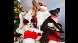 Meet your new best friend at PACC's Santa Adoption Party Dec. 9-10