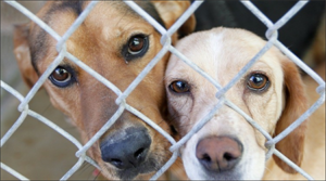 Monsoon rain means reduced adoption fees at PACC