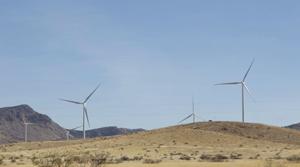 Southern Arizona wind farm investigated after death of bat, eagle