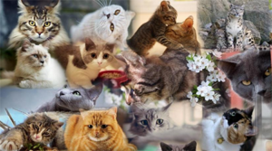 HSSA has over 150 Cats Waiting for Forever Families