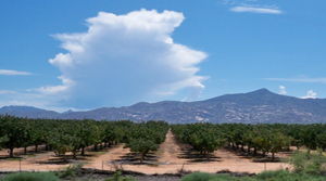 Large Pecan Operation in Cochise County in Receivership after Default of $20 million loan