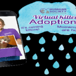 HSSA Launches Virtual Kitten Adoptions